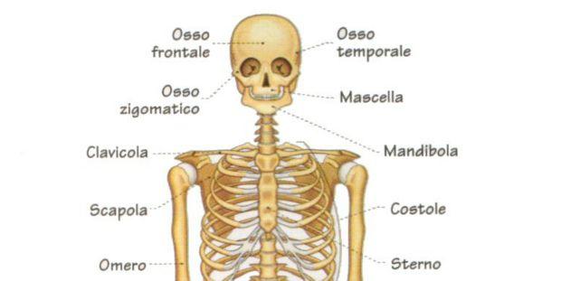 BeFunky_scheletro